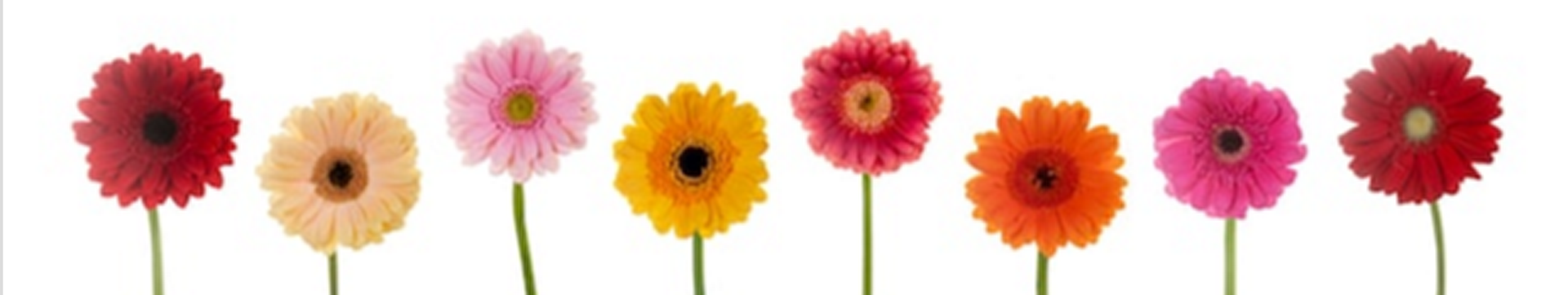 Row of flowers 1 (Copy).png